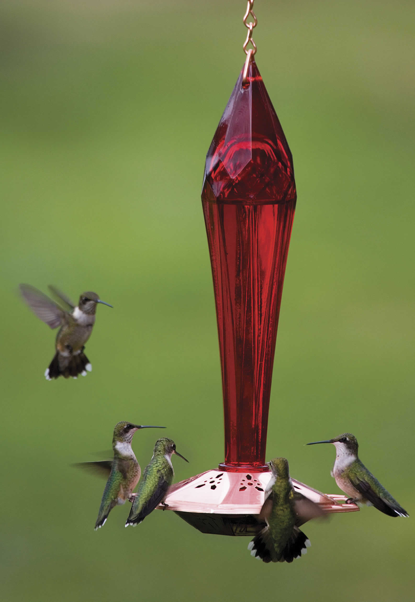 humingbird yardbirds zoom ruby hummingbird feeder red product