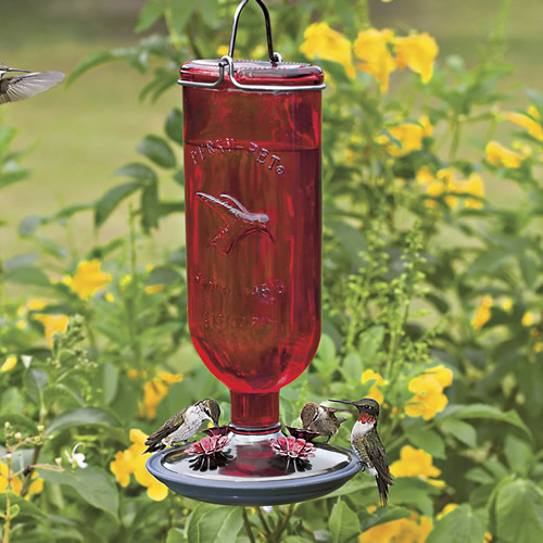 put spring season in feeder hummer out bird hummingbird when to feeders humming