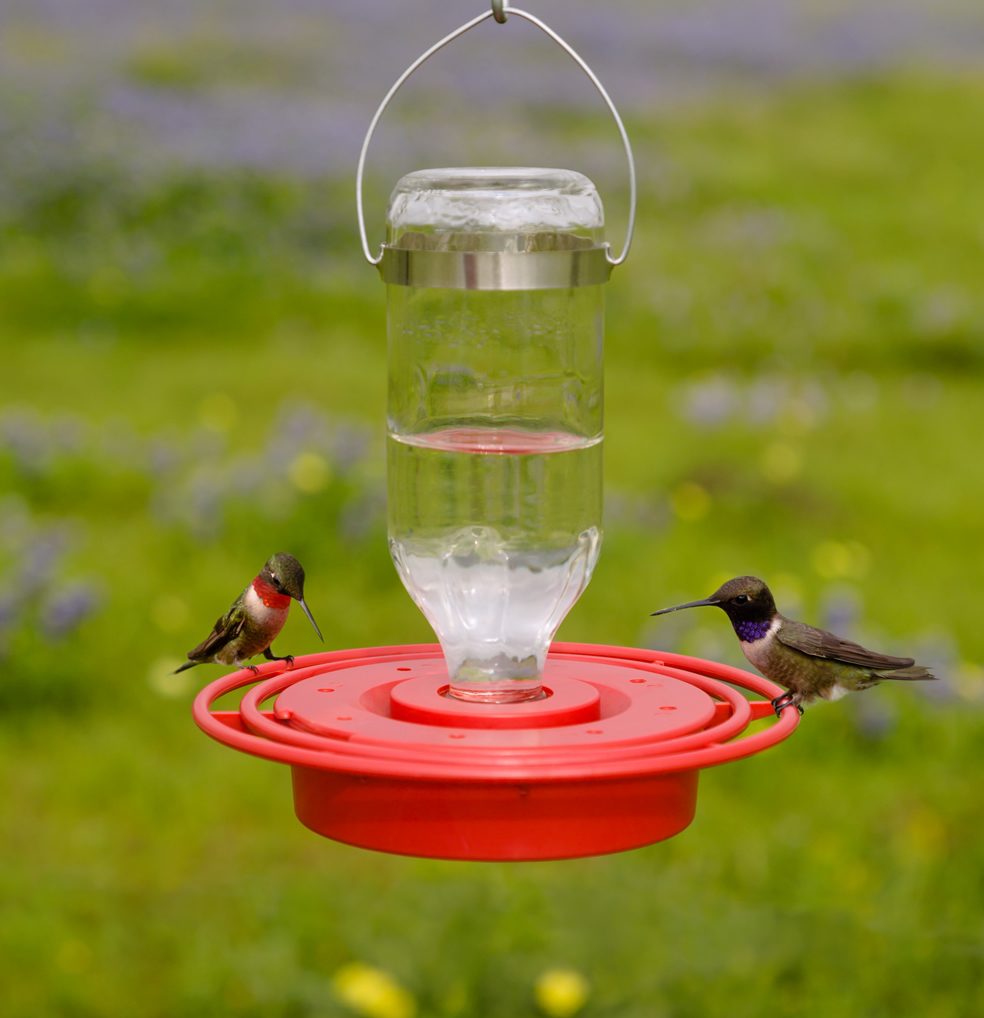 gravity hummingbird feeder fed humingbird fuchsia twe pink real products model fuschia so