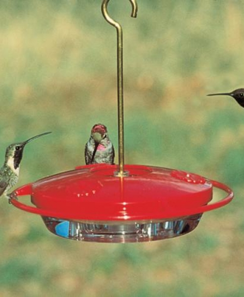 Humming Bird Center
